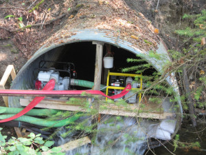 Pumps and hoses for Comox Logging Road culvert improvements.  Photo by K Clouston